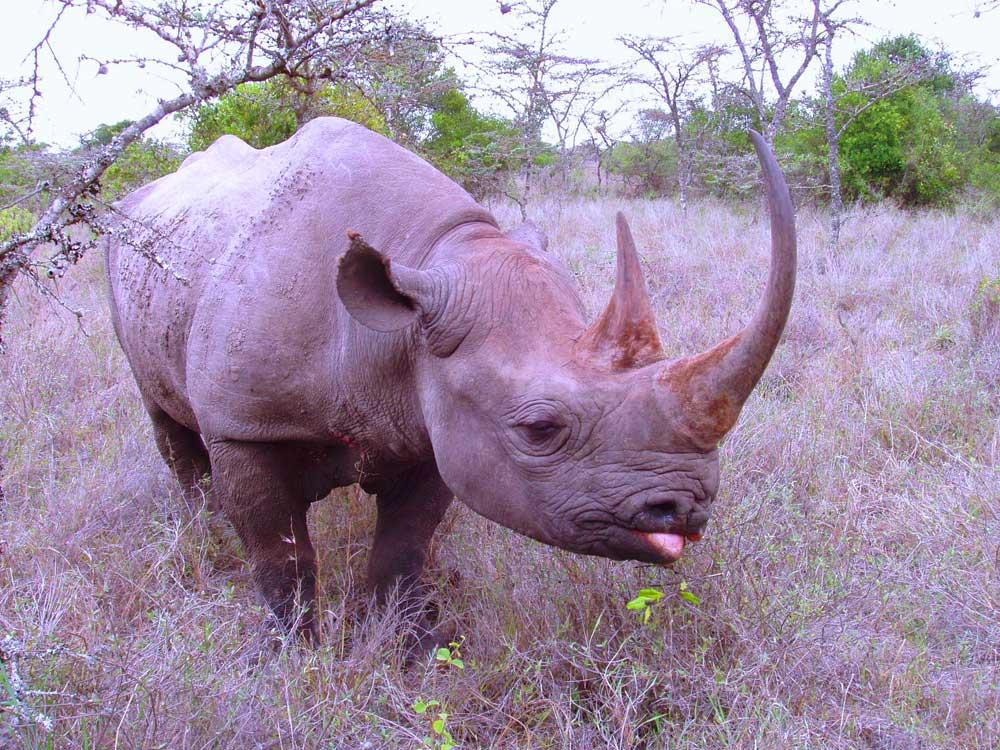 Rhino Kruger National Park Big 5 Image Gallery