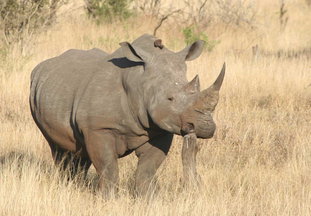 OPERATION: Stop Poaching Now Program in Southern Africa