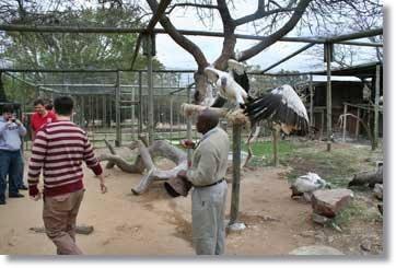 Moholoholo Wildlife Rehabilitation Centre Kruger National Park South Africa