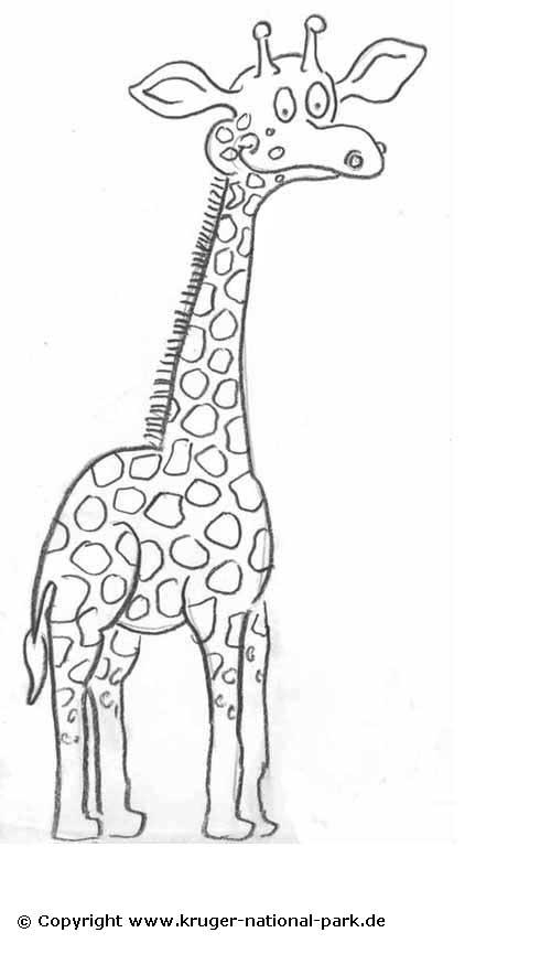 Safari Tiere Malvorlagen Malvorlagencr