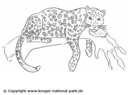 Cheetah Coloring Pages Easy