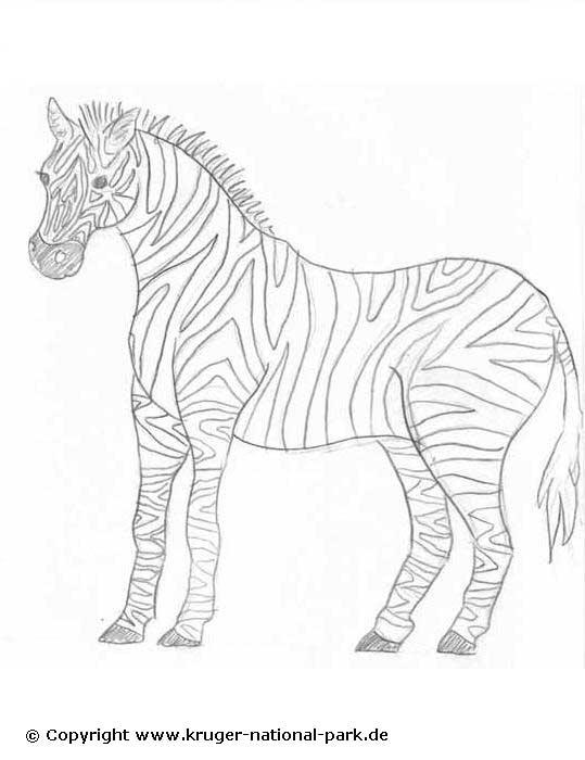 Malvorlagen Safari Tiere | My blog