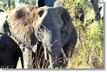 Kruger National Park Elephant Safari and Tours
