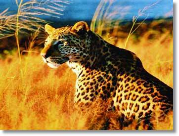 Kruger National Park Big 5 Safari