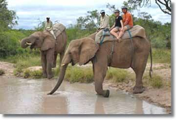 Elephant Back Safaris - Kruger National Park