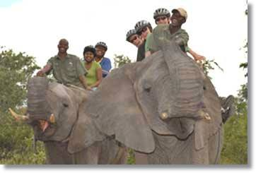 Elephant Safari and Tours