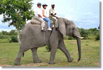 Kruger National Park Elephant Tours