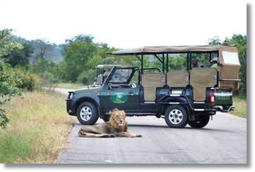 Wildlife Viewing Lions