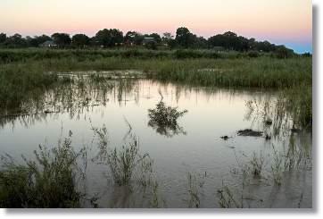 Reservate in Südafrika MalaMala Lodges Mainlodge