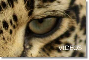 MalaMala Video Wildlife Videos vom Wildpark am Krügerpark Safaris und Touren