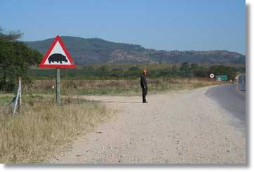 Attention: Hippos! - Street Signs and Warnings at the Kruger National Park