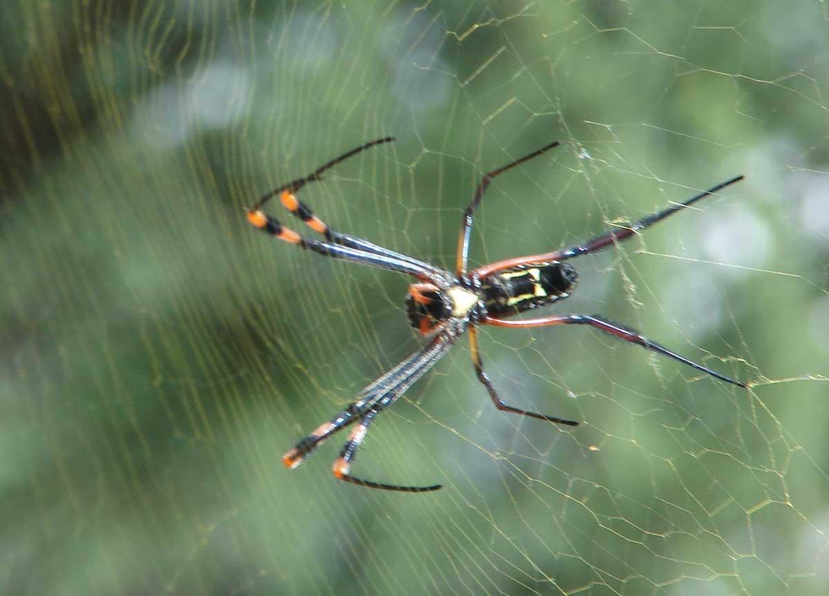 Südafrika Spinnen Kruger Park Spinnentiere