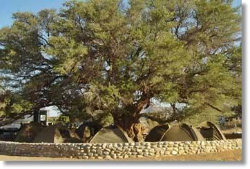 Kruger Nationalpark Urlaub Afrika Camping Safaris Südafrika Zeltsafaris
