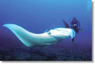 Mozambique Diving Tours