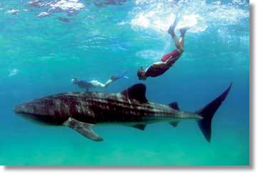 Mozambique Diving Holiday