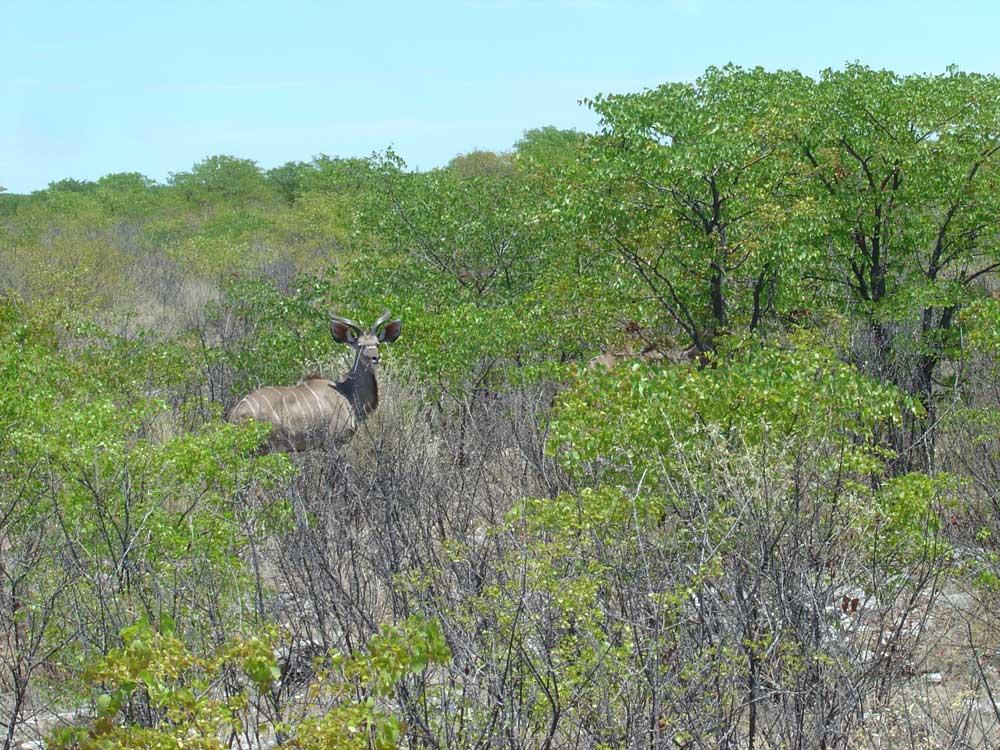 antilopenarten in afrika