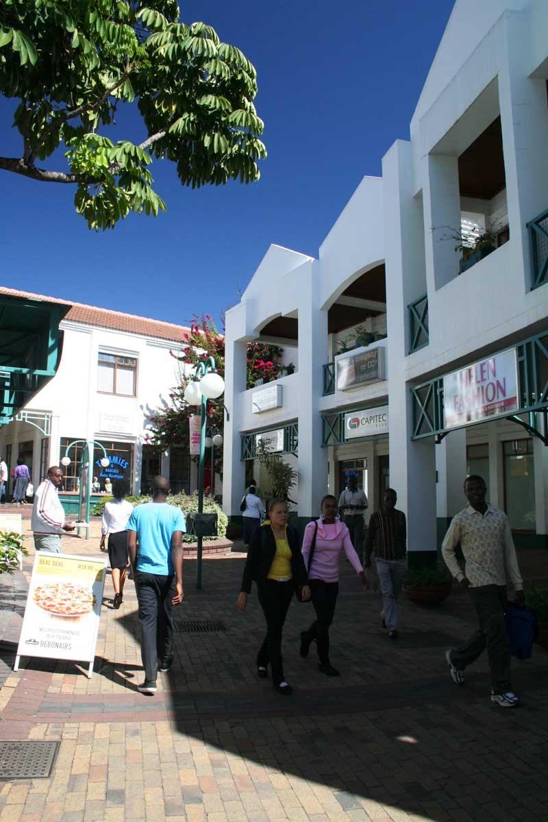jacaranda bäume in pretoria