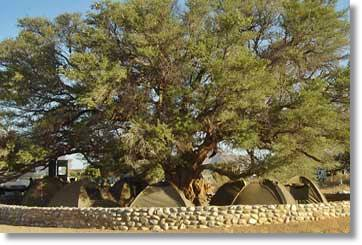Tent Camp in the Kruger National Park South Africa
