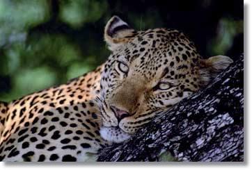 Namibia Safaris und Touren in Afrika