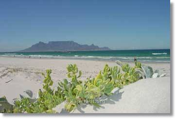Cape Town Tours to the Garden Route from Port Elizabeth