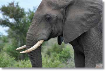 Addo Nationalpark Touren Garden Route Camping Safaris von Kapstadt
