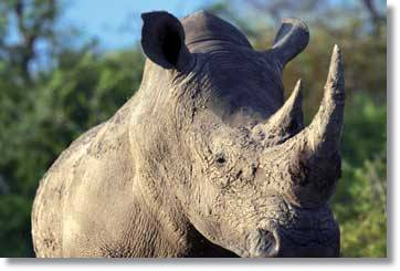 Kruger National Park Big Five South Africa Safaris