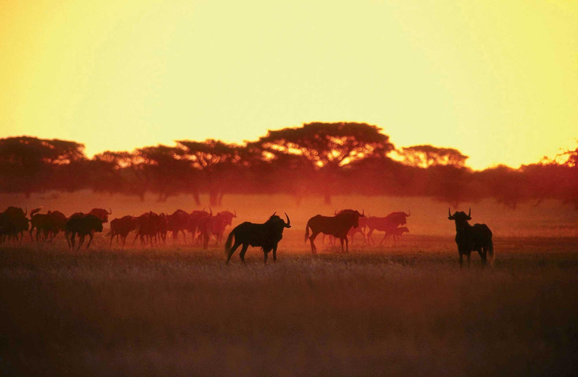 Закат африка