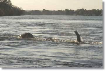 Zambezi River Tour