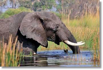 Kapstadt Safaris Südafrika Rundreisen Afrika Touren über Namibia, Botswana und Simbabwe