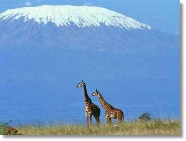 Kilimanjaro Bergbesteigung Machame Route